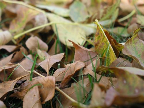 Fall, a bug's eye view