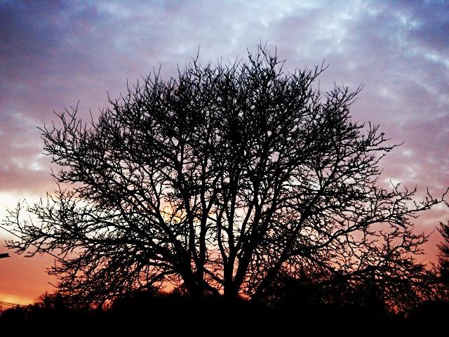 Royal thicket