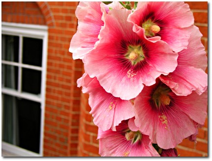 Flowers and a window