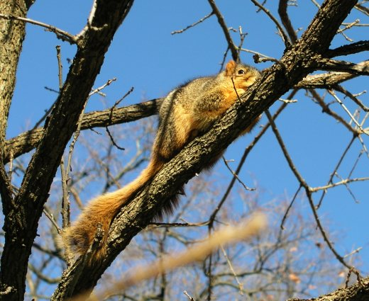 A squirrel on a tree. Not too much else to describe.